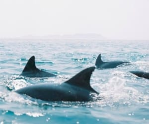 animal, dolphin, and ocean image
