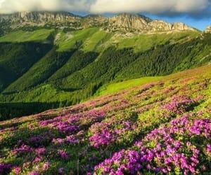 belleza, naturaleza, and pradera image