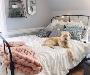 bedroom, room, and dog image