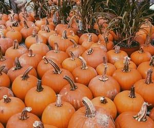 pumpkin, fall, and autumn image