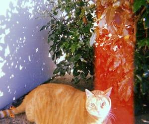 cat, huji cam, and garfield image