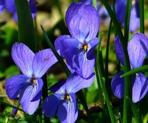 beautiful, flowers, and garten image