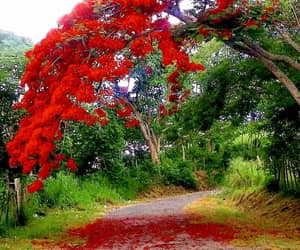 country road, puerto rico, and gurabo image