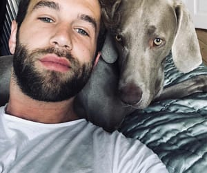 animals, andre hamann, and love image
