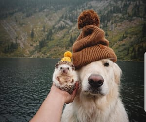 doggie, love, and fall image