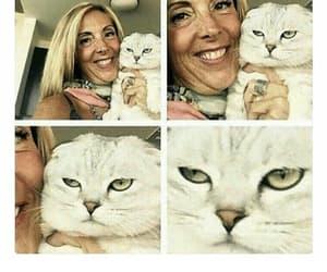 single cat lady meme image