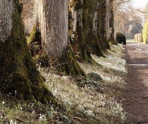 secret garden and woods image