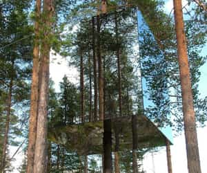 forest, mirror, and treehouse image