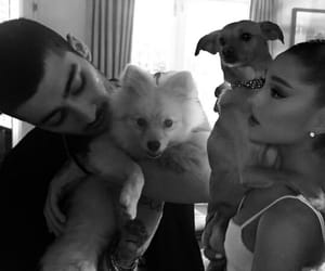 b&w, couple, and dogs image