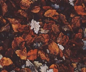 autumn, colorfull, and fall image