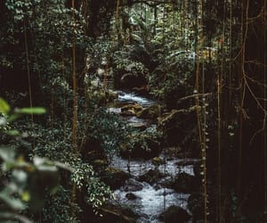 forest, green, and plants image