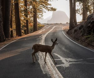 deer, autumn, and forest image