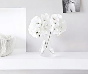 flowers, white, and interior image