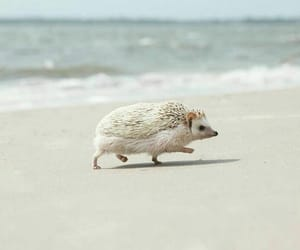 animal, beach, and hedgehog image