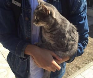 boy, cat, and fashion image