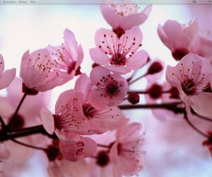 flowers, blossom, and cherry image
