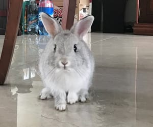 conejo, fluffy, and gris image
