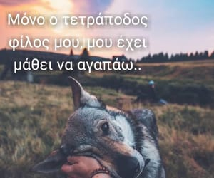 dogs, greek, and quotes image