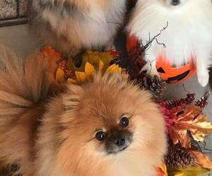 adorable, autumn, and dogs image