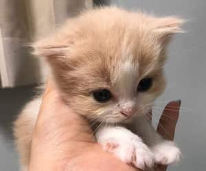 cute, kitten, and animals image