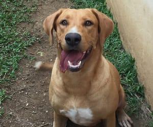 dog, puertorico, and mia image