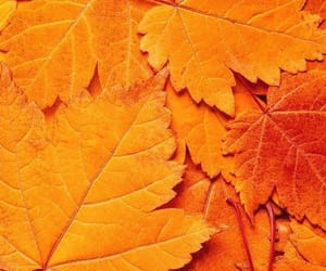 orange, leaves, and autumn image