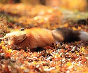 autumn, fox, and fall image