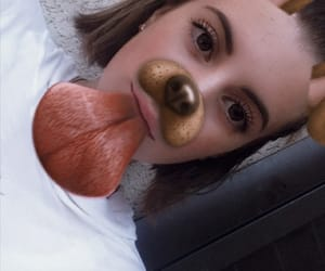dog, europe, and filters image