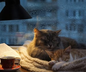 book, cat, and droplets image