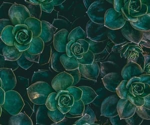 wallpaper, green, and plants image