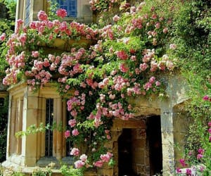 garden, rose, and flowers image
