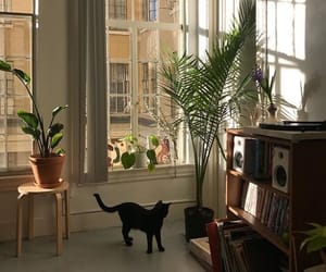 cat, aesthetic, and home image