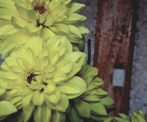 flower, nice, and flowers image