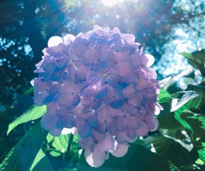 nature, flowers, and sun image
