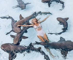 blue, girl, and shark image