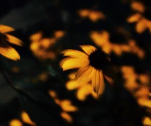 flower, night, and photo image
