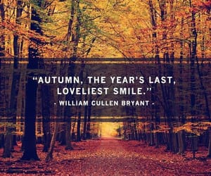 article, fall, and leaves image