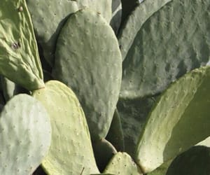 cactus, theme, and green image