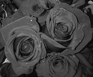 black&withe, cool, and roses image