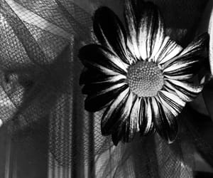 aesthetics, art, and black and white image