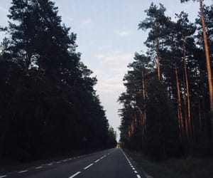 beautiful day, forest, and road image