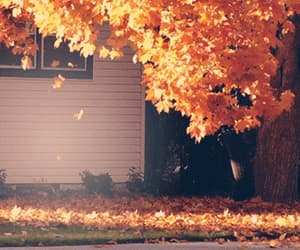 autumn, leaf, and coffee image
