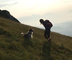 australian shepherd, best friends, and breathe image