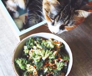 cat, food, and recipes image