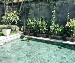 pool, summer, and plants image