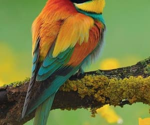 bird and ​beatiful image