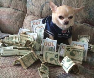 dog, money, and animal image