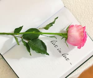 book, flower, and live image