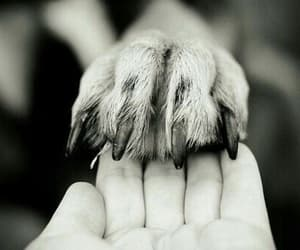 dog, animal, and hand image