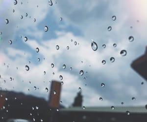 alive, rain, and rainy image